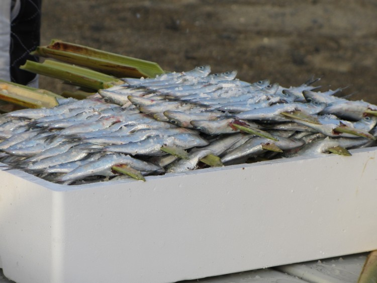 Sardines ready to cook on the wood fires