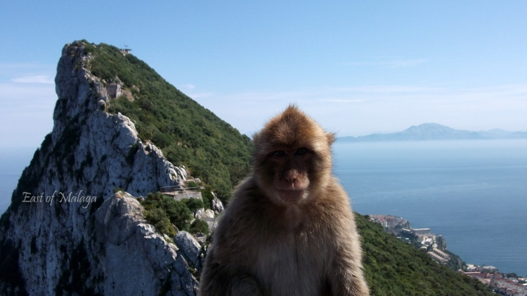 Barbary ape at the top of the Rock of Gibraltar with Africa behind