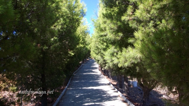 Avenue of pine trees leading to the Buddhist Stupa, Vélez-Málaga, Spain