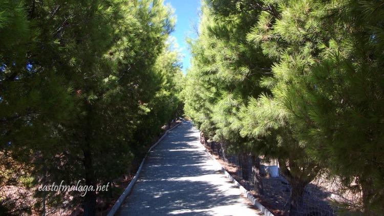 Avenue of pine trees leading to the Buddhist Stupa, Vélez-Málaga, Spain
