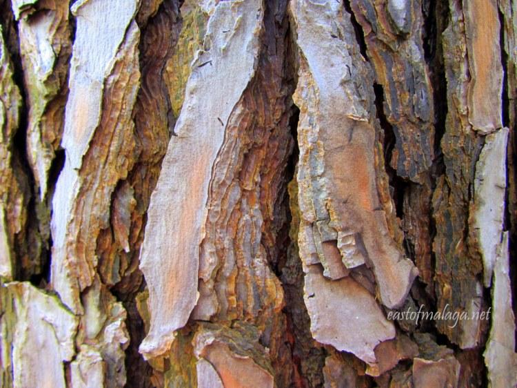 Tree bark texture at the Jardin Concepcion, Málaga.