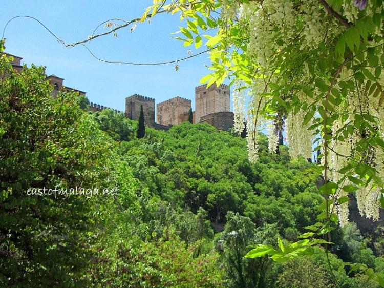 La Alhambra through wisteria