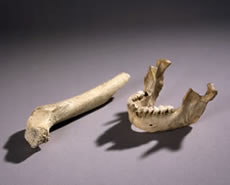 Mandible and femur from Zafarraya