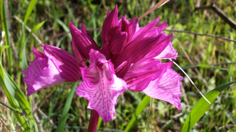 Wild orchids in the garden