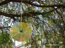 old CD catching the sunlight in a tree