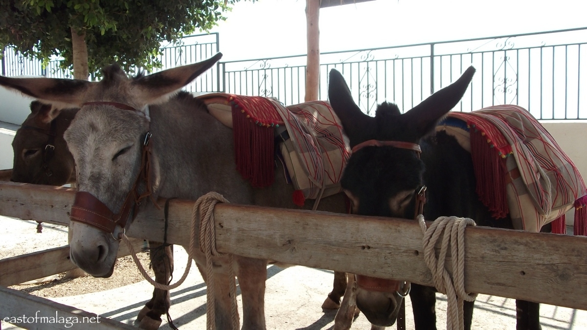 Donkey taxis for rent in Comares