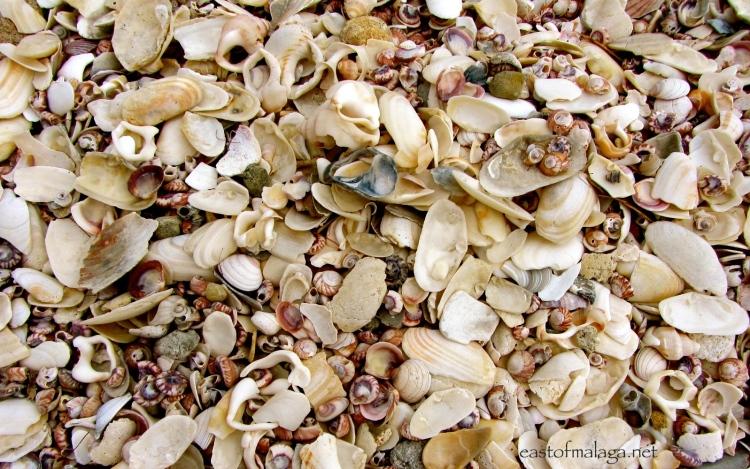 Shell beach, New Zealand