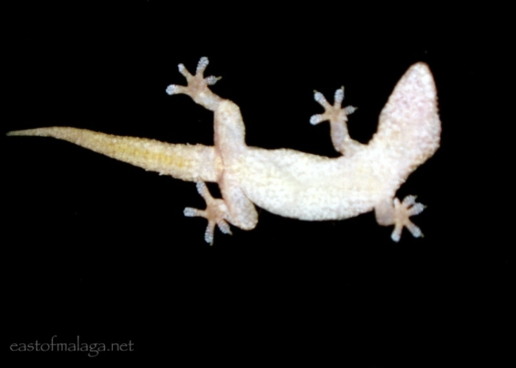 Gecko through the window