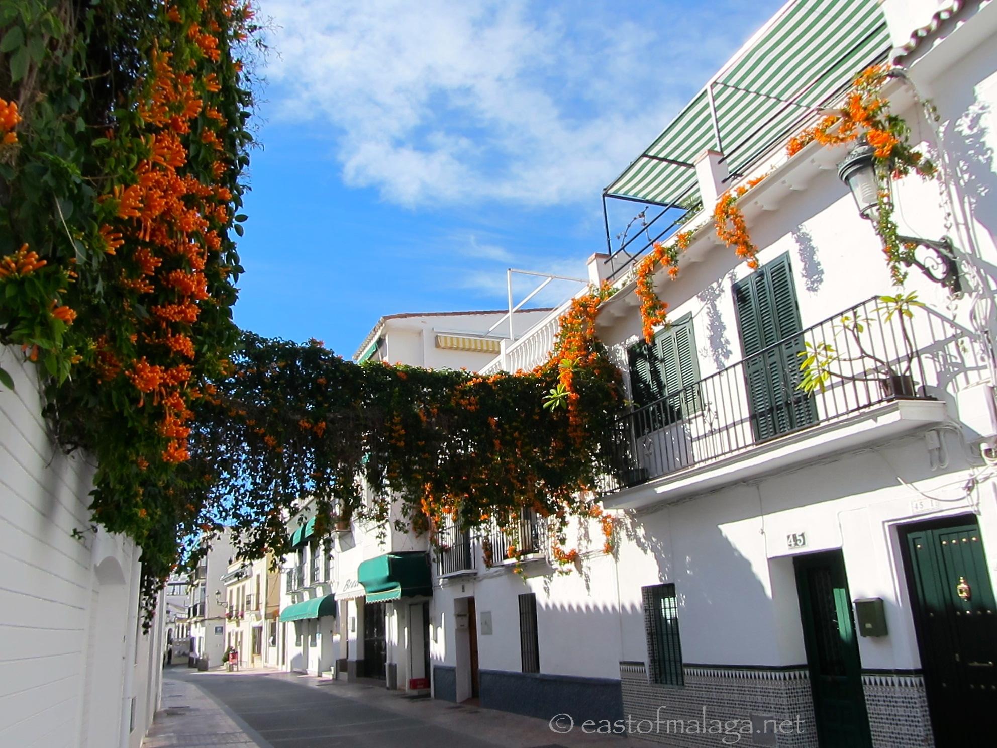 Hark! Orange Trumpets herald the warm winter weather | East