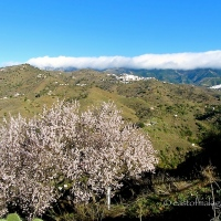 Silent Sunday in Andalucía: White Villages and Pink Blossom