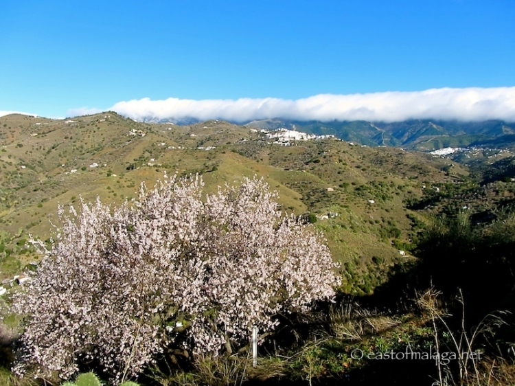 Two white villages and pink almond blossom, Andalucia