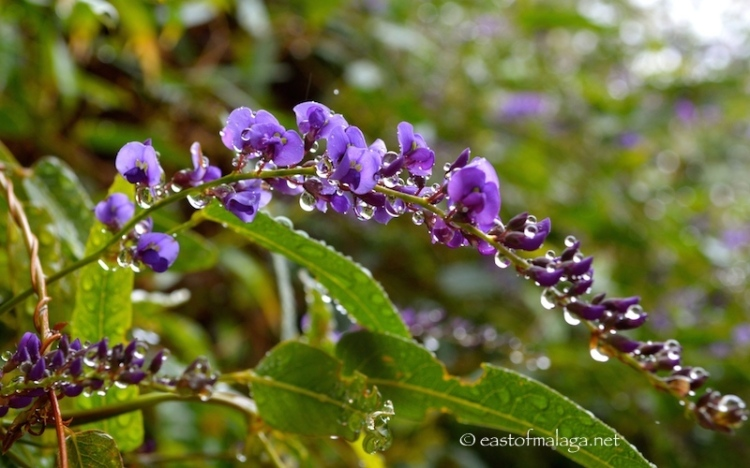 Raindrops on purple flower