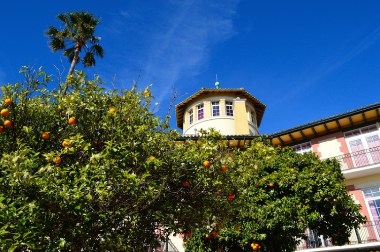 Orange trees at Hotel Reina Cristina, Algeciras, Spain