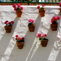 Wordless Wednesday: Flower-filled pots in Torrox pueblo