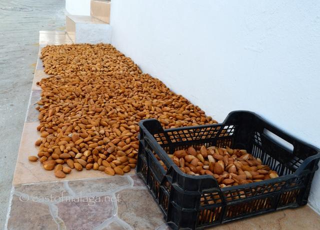 Almonds, Canillas de Aceituno