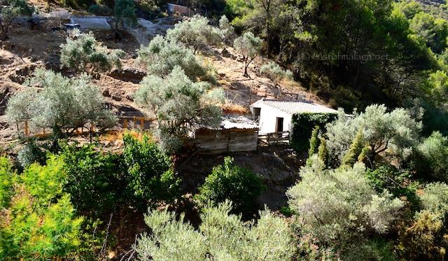 Mules in El Acebuchal