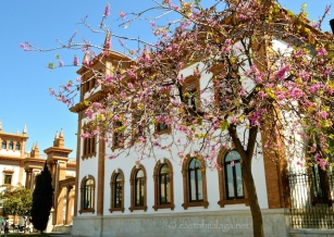 Blossom outside the old Tobacco Factory, Malaga
