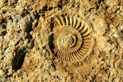 Ammonite fossil at El Torcal