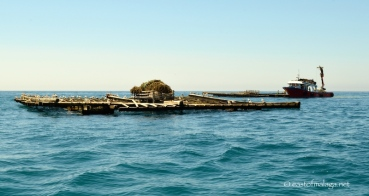 Mussel beds off Caleta